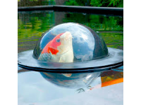 Floating Fish Sphere Small