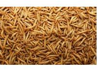 Meelwormen 5 kilo