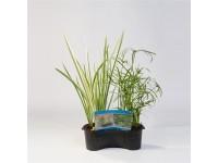 Mix mand ovaal 40 cm met 3 Planten