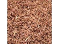Rode Muggenlarven 1 kilo