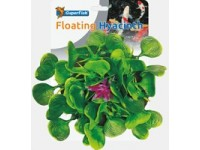 SF Pond Deco Waterhyacint